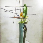 Pitcher Plant - Nageire